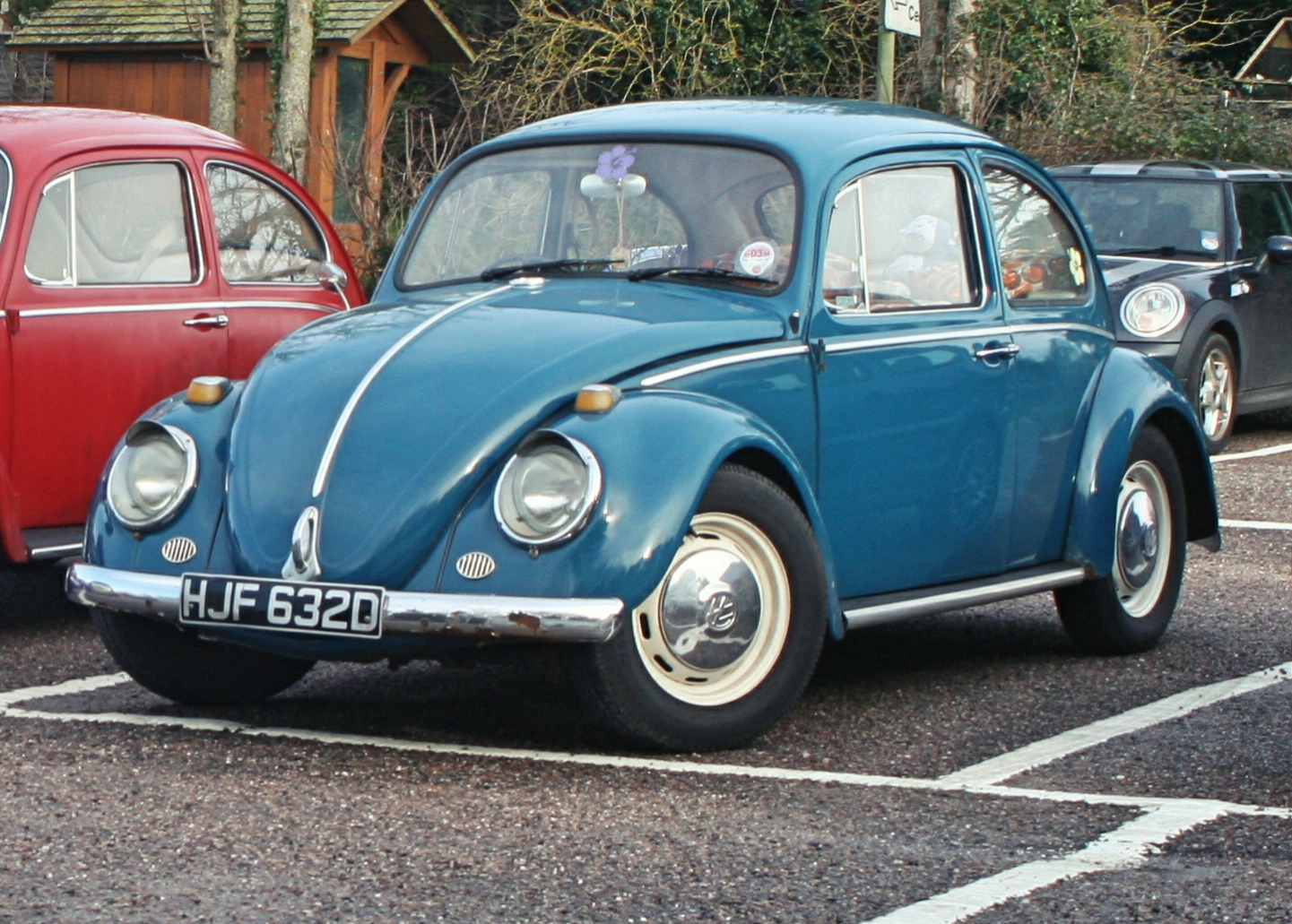 Zoes Beetle 'Doodles'